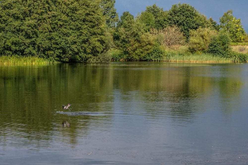 Natur og springende fisk 4